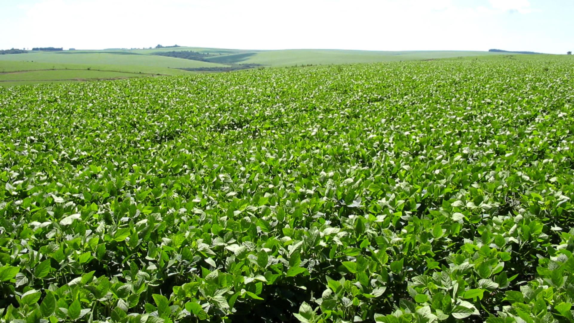 Fotos de granjas agricolas 53